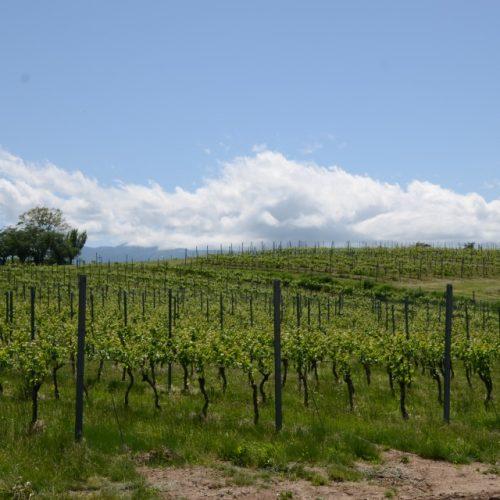 【シャトー・メルシャン植樹体験レポ】7年後の2025年に美味しいワインを飲もうよ!
