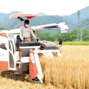 イチローズモルトで使用、黄金色に実った大麦を刈り取り 秩父で収穫作業「おいしいウイスキー造って」