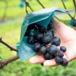 打倒ロマネ・コンティと言える「日本ワイン」って知ってる?